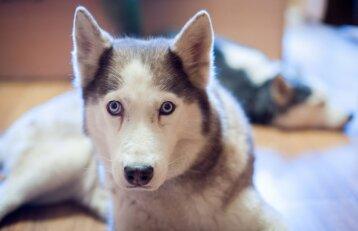 Gyvūnų prieglaudos įkainiai: už valandai priglaustą pasiklydusį šunį – 50 Eur