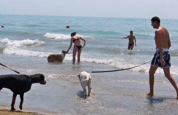 Nuomonė. Šalin šunis iš paplūdimių – šlapime maudysimės patys