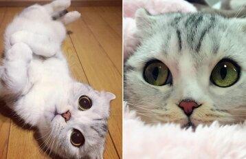 Katės akys žaibiškai užkariauja socialinius tinklus: gražuolės žvilgsnis hipnotizuoja