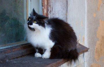 Niekas netikėjo, kad ši katė taip elgiasi, todėl paštininkas viską nufilmavo!