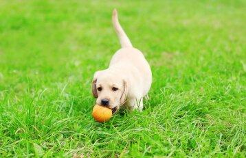 Per daug stiprus ryšys su šeimininku turi įtakos šuns elgesiui