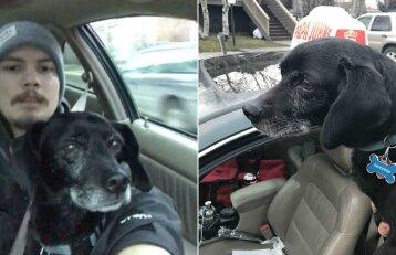 Vėluojantis vyras galėjo netekti darbo, bet nedvejojo: sustojo išgelbėti šuns