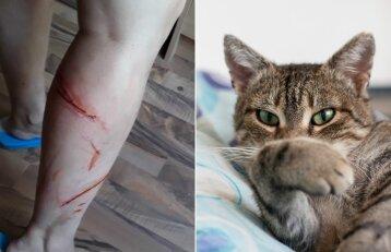 Košmaras anytos namuose: teko sprukti sudraskytomis kojomis