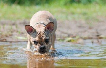 Gindamas šunį medikas aukoja atostogas