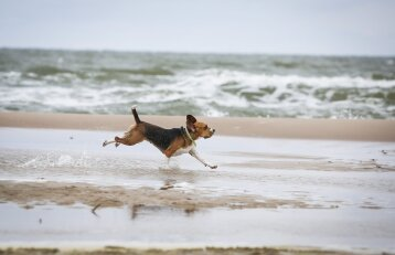 A. Veryga panaikino draudimą į paplūdimius eiti kartu su gyvūnais