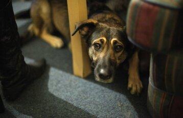 Lazdijų rajone iškankintas šuo: išgelbėtas gyvūnas sparčiai sveiksta