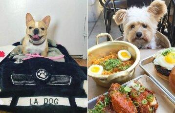 20 labai išlepintų šunų: gali būti, kad jie gyvena geriau nei jūs