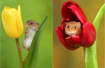 Nuotraukos, kurios pakelia nuotaiką: pažiūrėkite, kaip pelytėms gera žieduose