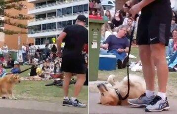 Šuns spektaklis parke sukėlė juoko bangą: išeiti nenorintis šuo nejudėjo iš vietos