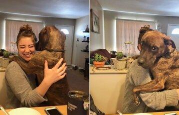 Priglaustas šunelis dėkoja šeimininkei: nuolat prašo apsikabinti