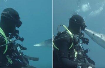 Ryklys nardančio vyro neišgąsdino: pažintis baigėsi bučiniu