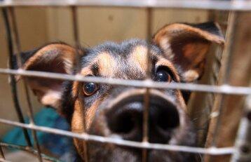 Padėti beglobiams gyvūnams dabar bus dar paprasčiau