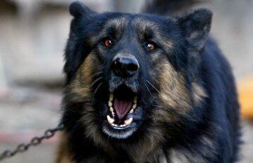 Šunų lojimą ir kačių kniaukimą siūloma spręsti įstatymo pataisomis