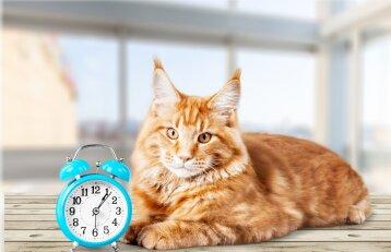 Šiandien minima kačių diena: jų draugija džiaugiasi kas ketvirta šeima šalyje