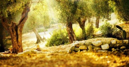 Receptas, pasiskolintas iš Biblijos, išgydo nuo visų ligų?