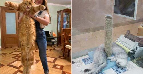 Slapti kačių talentai arba kaip jos taip sugeba?