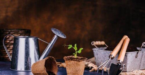 Būtini balandžio darbai darže ir šiltnamyje