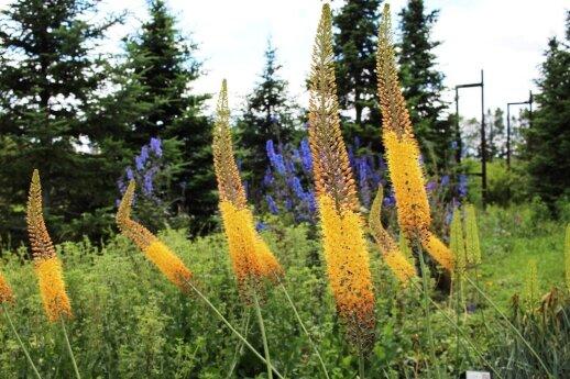Augalai kaip loterija: selekcininkas E. Misiukevičius pasakoja apie šiuolaikinius augalus