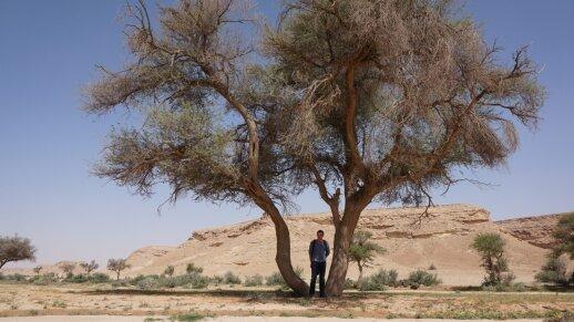 Dykumos mokslo šventovėje dirbantis lietuvis: jaučiuosi lyg auksiniame narvelyje
