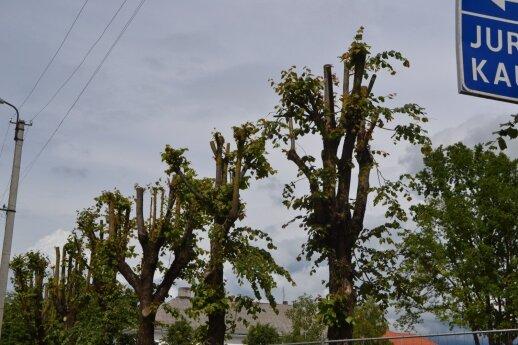 Pavyzdys Šakiuose, kaip nereikia genėti medžių.
