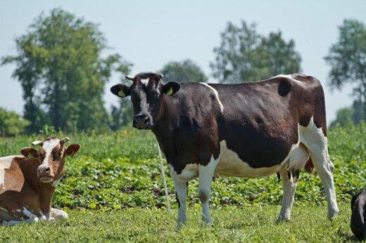 Karvėms negalima priartėti prie vandens