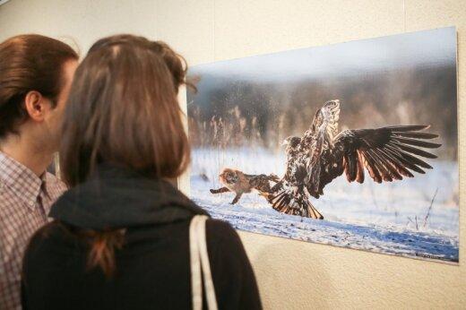 """Konkurso """"Gintarinis žaltys 2013"""" apdovanojimai"""