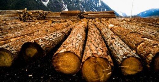ES sugriežtino medienos pardavimo taisykles