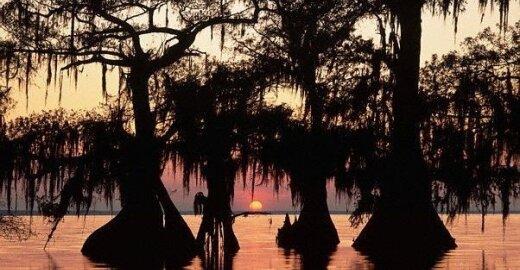 Manchac pelkė, Luiziana