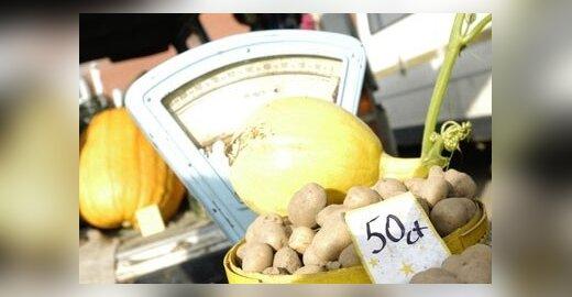 Europos Komisija: genetiškai modifikuotos bulvės saugios