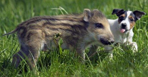 EP dar labiau apribojo bandymus su gyvūnais