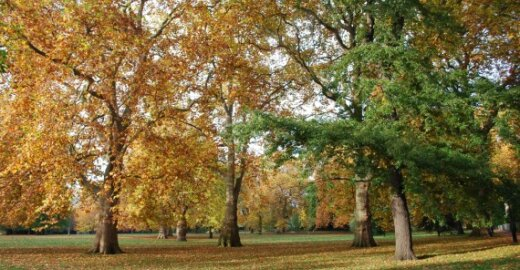 Ekspertė: Europa sutinka mokėti pasauliui už bioįvairovės išsaugojimą