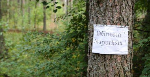 Naikinamas miškas