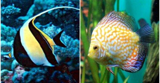 Gražiausios žuvys
