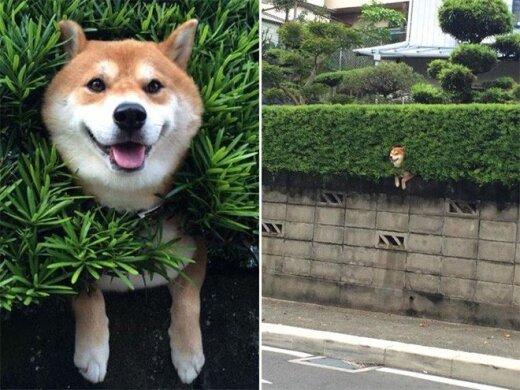 18 labai juokingai įstrigusių gyvūnų, kurie apsimeta, kad viskas gerai