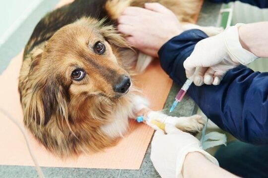 Šuo pas veterinarijos gydytojus