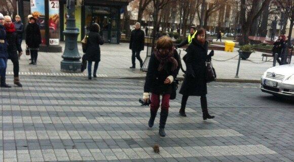 Крыса перешла дорогу по пешеходному переходу в центре Вильнюса