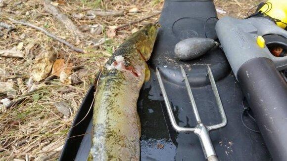 Neleistinu žvejybos įrankiu sugauta lydeka