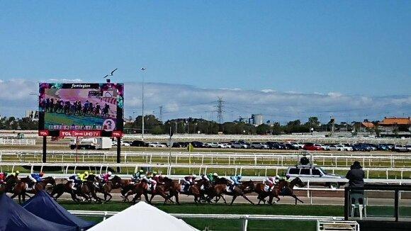 Melburno žirgų lenktynės