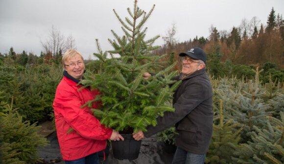 Kalėdinių ir dekoratyvinių medelių auginimas – šeimos verslas