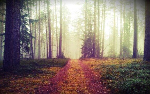 Pirmykštis sportas kviečia grįžti į mišką