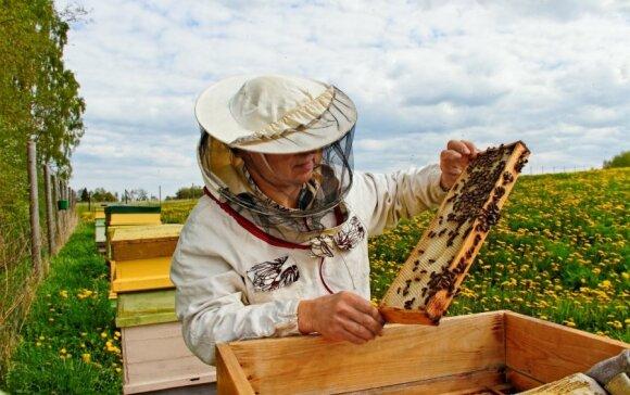 Tokios prastos vasaros bitininkai neatsimena: medaus kainos gąsdina žmones