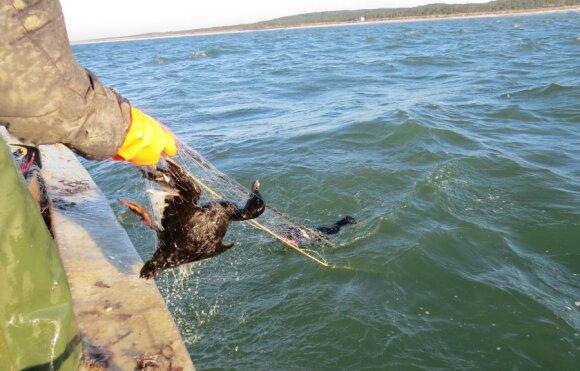 Žvejų sugautas paukštis