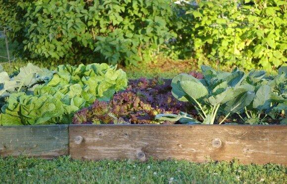 Nitratai daržovėse. Kaip sumažinti jų kiekį?