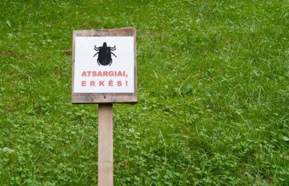 Atsargiai, žolėje gali tūnoti erkės