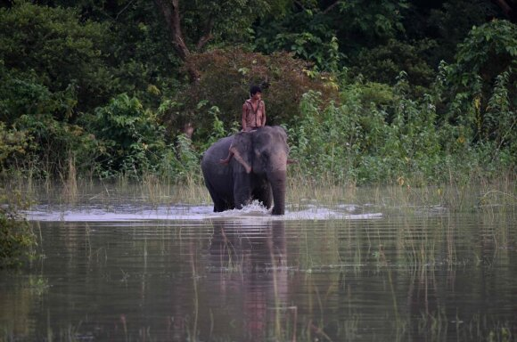 Drambliai Afrikoje
