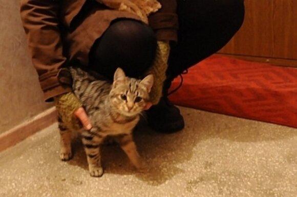 Pasimetusiai katytei iš Šeškinės ieškoma globa arba namai