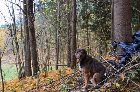 Sodybą saugantis šuo