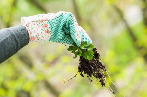 Tingiems sodininkams: racionalūs patarimai, taupantys laiką ir energiją