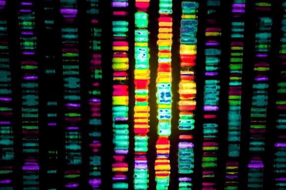 Nuskaitytas žmogaus genomas.