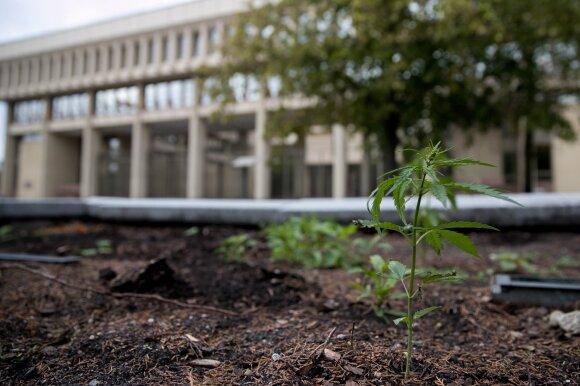 Labiausiai paplitęs narkotikas Lietuvoje: nors ir ne mirtinas, bet silpnėja atmintis, prastėja rezultatai